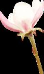 kwiatek 4.png