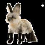 Животные 5 0_5099e_bcfe17a_S