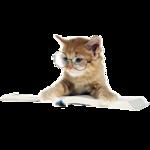 Кошки 5 0_50a34_a085235_S