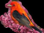 Птицы  разные  0_51c54_c751f5c6_S
