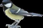 Птицы  разные  0_51c76_f44d080_S
