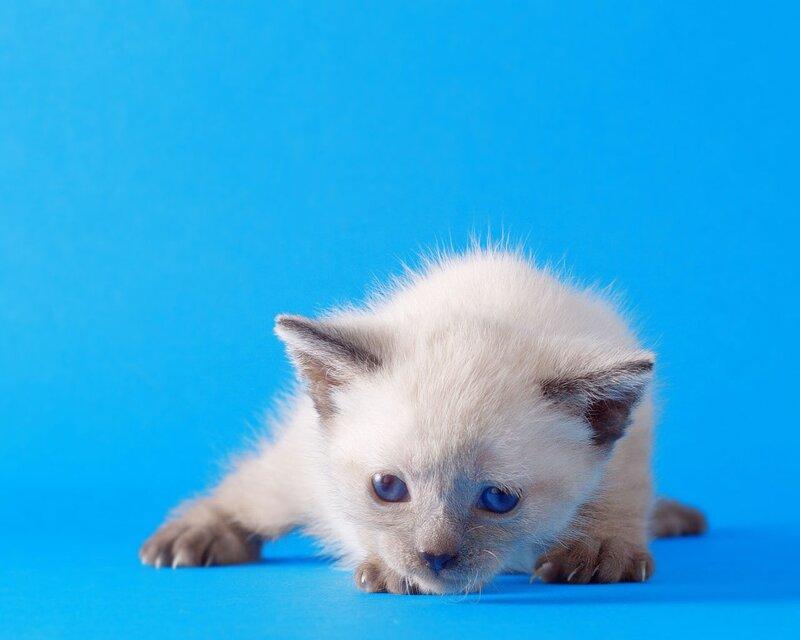 Кошки  0_52951_db461ed1_XL