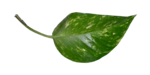 «ZIRCONIUMSCRAPS-HAPPY EASTER» 0_53d88_da3c5102_S