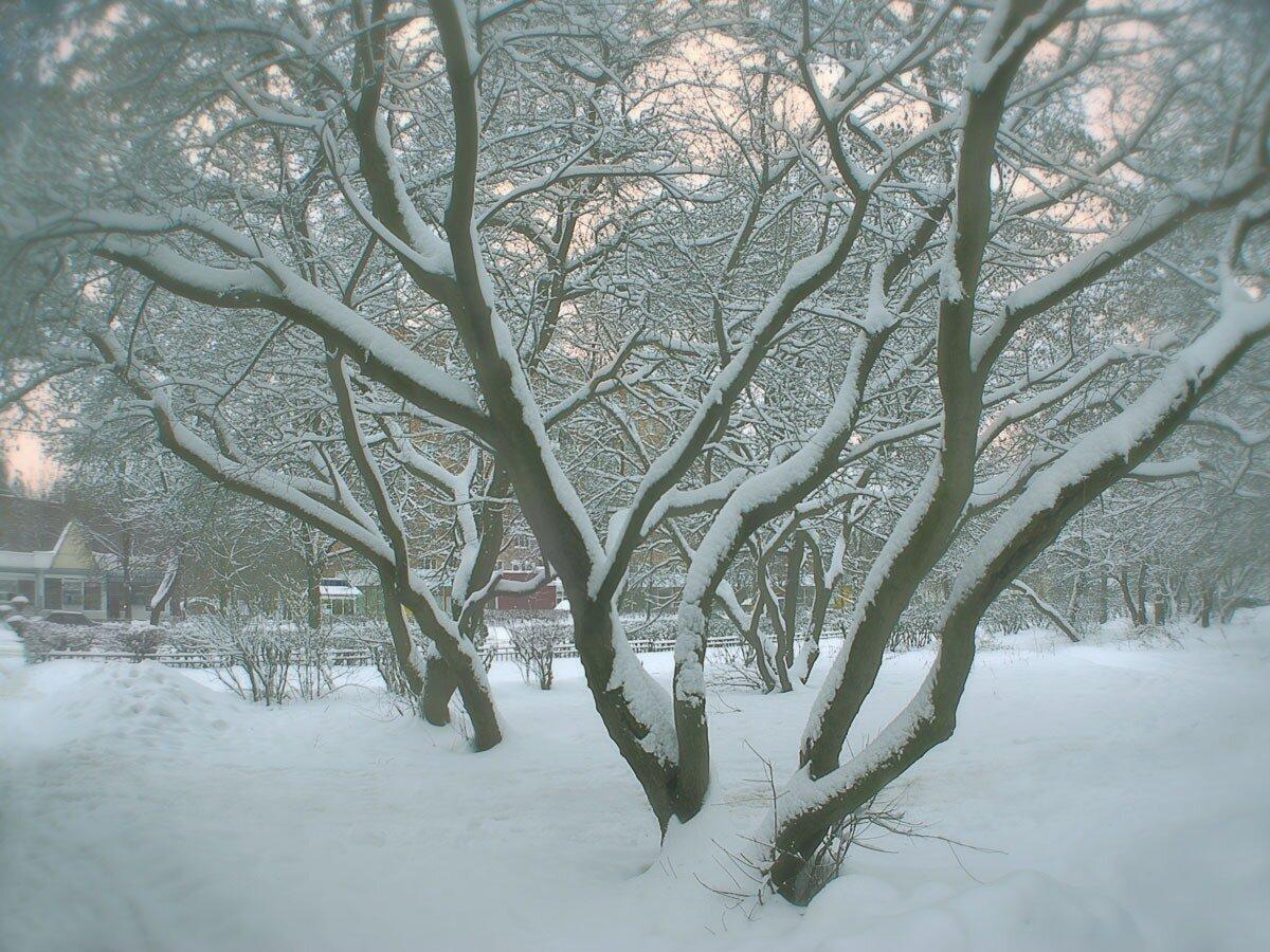 Зимнее утро. Автор фото: Юрий Семенов