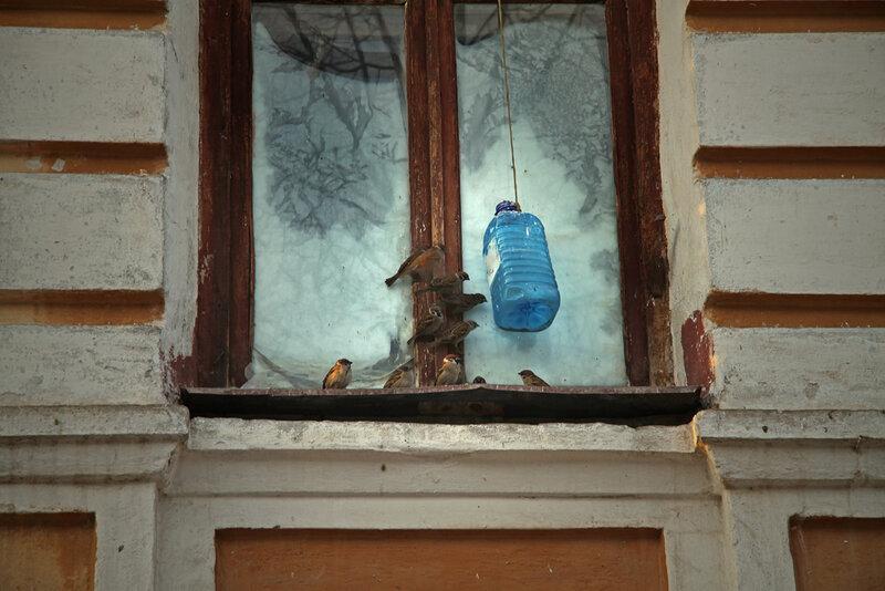 К чему воробей стучит в окно?