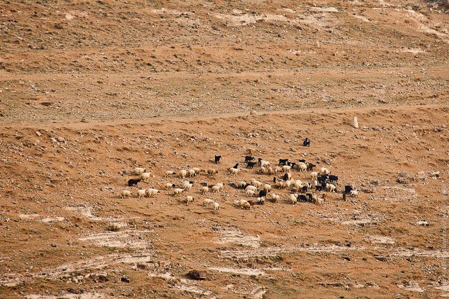 Окрестности Аль-Керака / Al Kerak