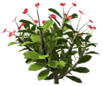 rose bush 2.png