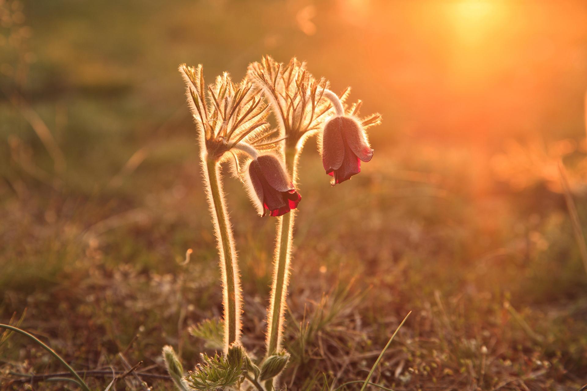 два цветка в лучах слонца