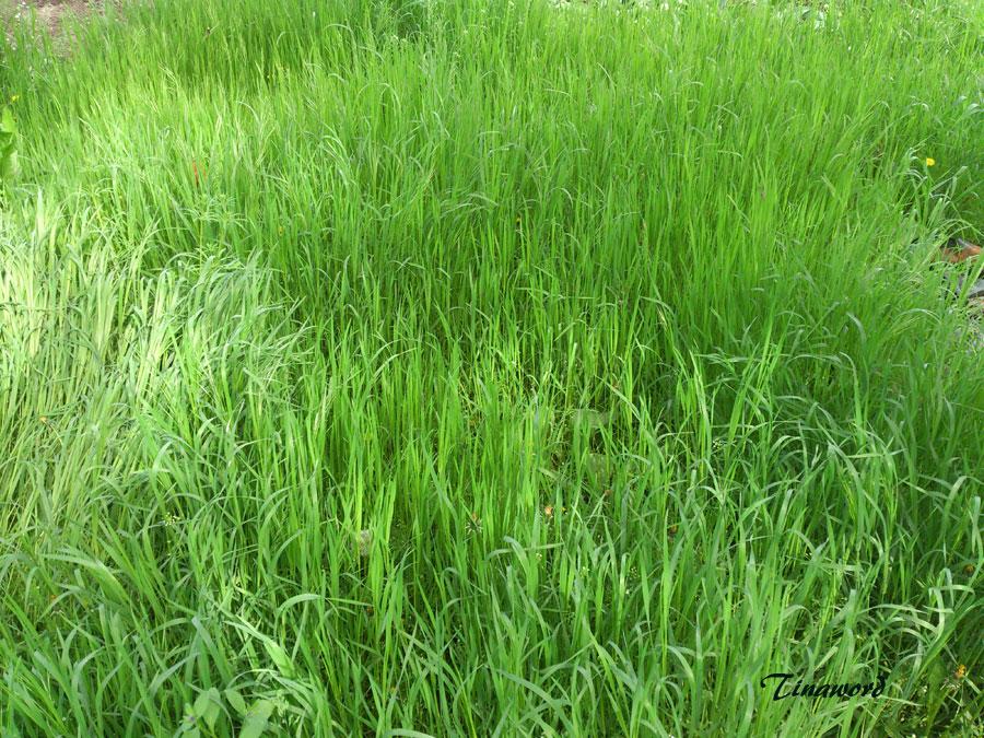 зеленая,-зеленая-трава-7.jpg