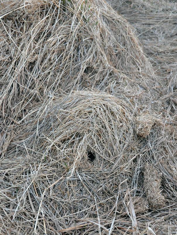 мышьи гнезда.jpg
