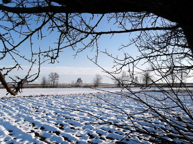 Снежный подарок января