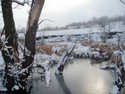 Зима. Сухие деревья