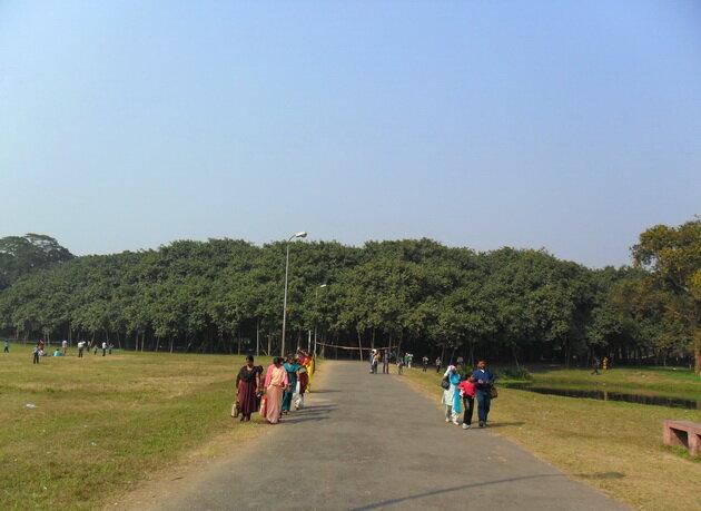 Великий баньян. Индия