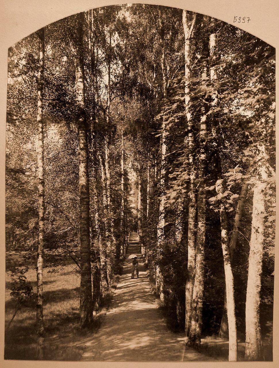 14. Вид березовой аллеи в усадебном парке