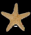 SD NV STARFISH.png