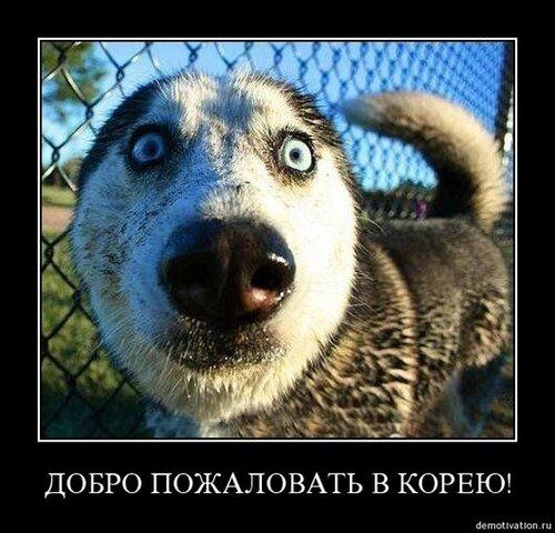 Приколы с собаками, приколы с ...: fotki.yandex.ru/users/cromizer/view/396398?page=0