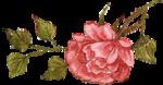 rosenrosa091.png