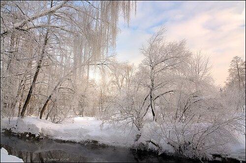 Морозное пробуждение леса.