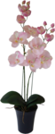 SD DM FLOWERS 3.png