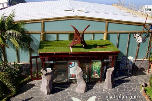 тенерифе, икод-де-лос-винос, музей бабочек