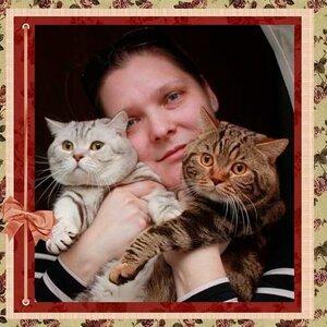 британские коты питомника БравоБРИ