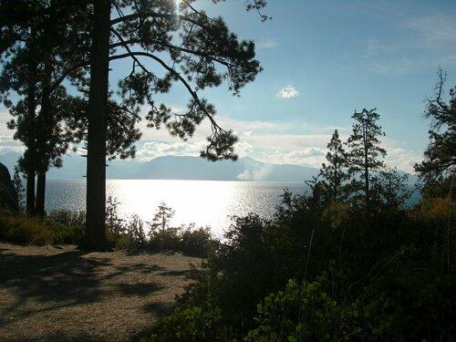 Сосны на берегу озера Тахо.