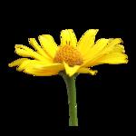 «doniar-HappySpring-pELEMENTY» 0_54fa0_ad67b3d_S