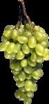Виноград  0_5a12c_91f94fa7_S