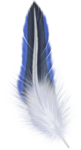 feather09.png