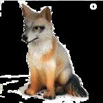 Лиса,волк  0_5092f_2af4edf2_S