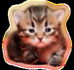 Кошки 5 0_509ff_3ad71adf_S