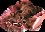 Кошки 5 0_50a0e_968ba528_S