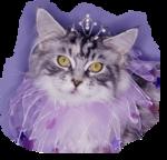 Кошки 5 0_50a1a_c88a2a00_S