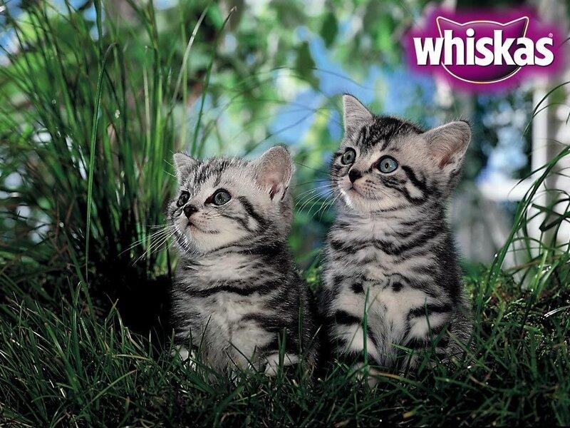 Кошки  0_52944_d66795ba_XL