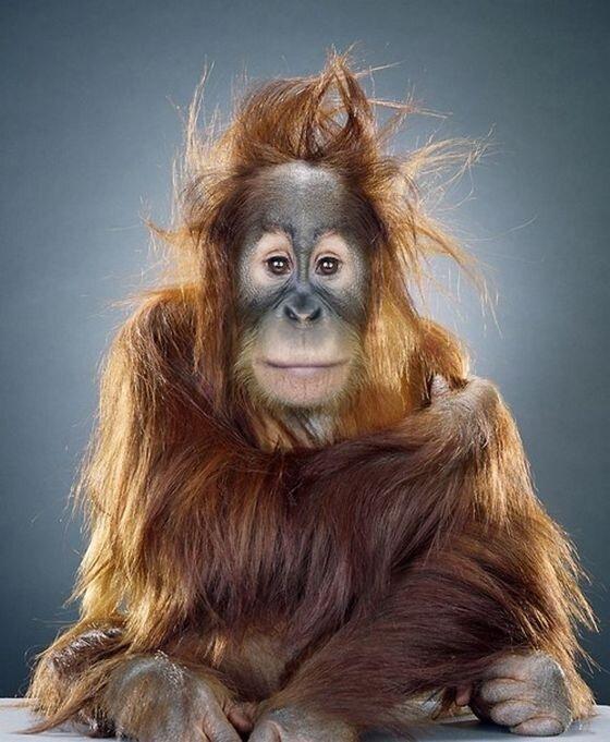 красивые фотографии обезьян
