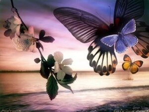 Во владивостокском океанариуме открылась уникальная экспозиция - Сад Живых Бабочек