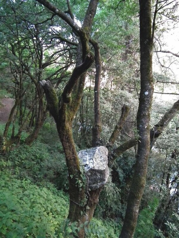И на камнях растут деревья.