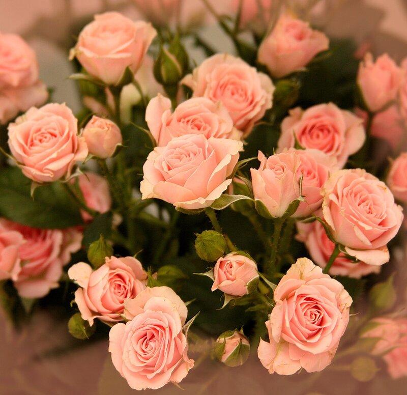 Картинки поздравлением, открытки маленькие розы с днем рождения