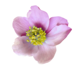 Purple charm_YalanaDesign (28).png
