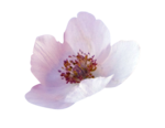 Purple charm_YalanaDesign (29).png