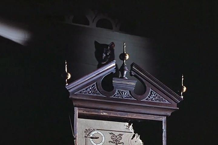 кошка в фильме Сказки темной стороны