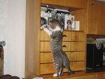 что-бы почитать про про нас-про кошек