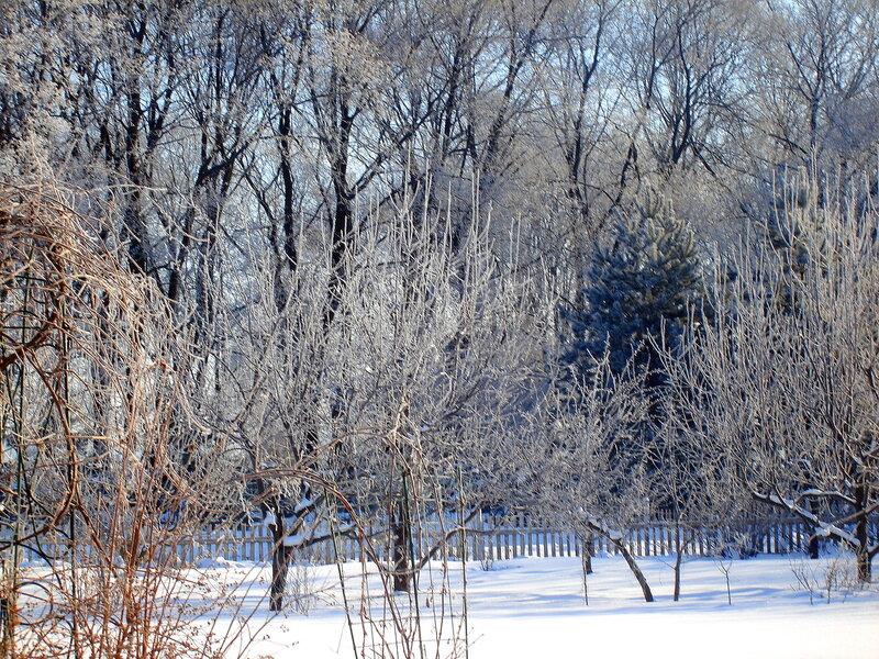Зима,с.Остров,февраль,иней