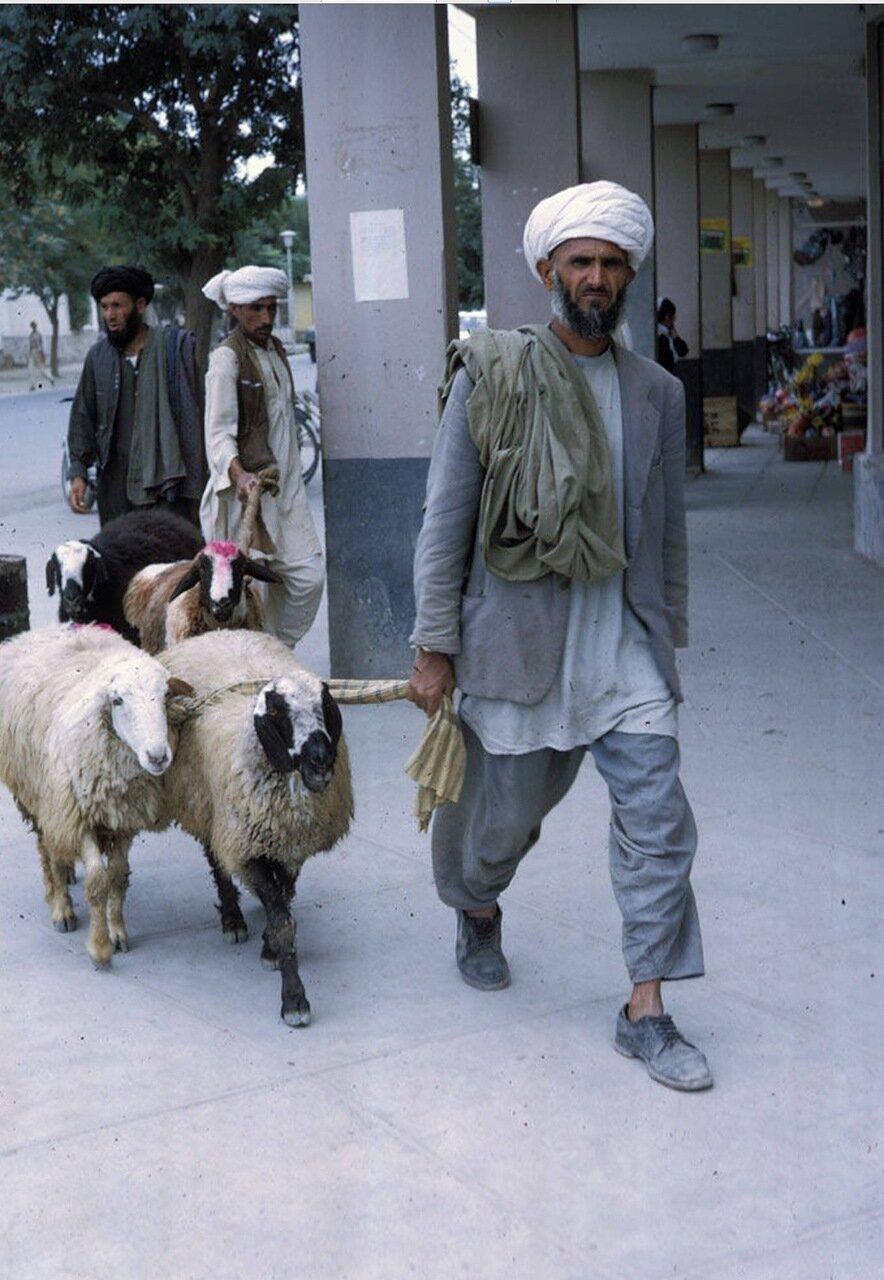 Человек с овцами