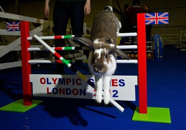 Кроличья Олимпиада 2012