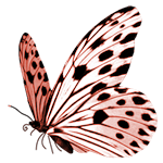 butterfly-sdh1.png