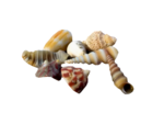 SD NV SEASHELLS 1.png