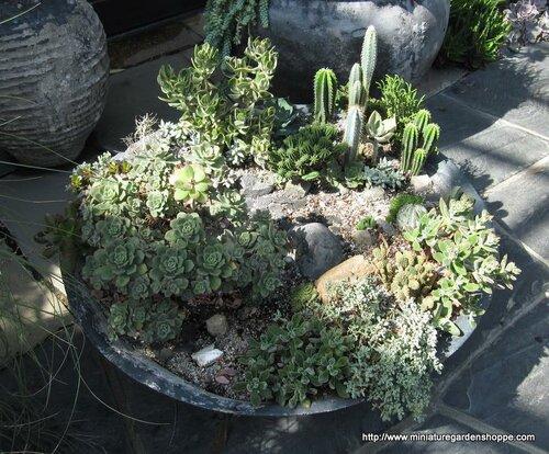 композиции из комнатных растений 5