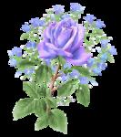 PP~LavenderRose2~DVDM.png