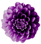 SD MGH FLOWER 1.png